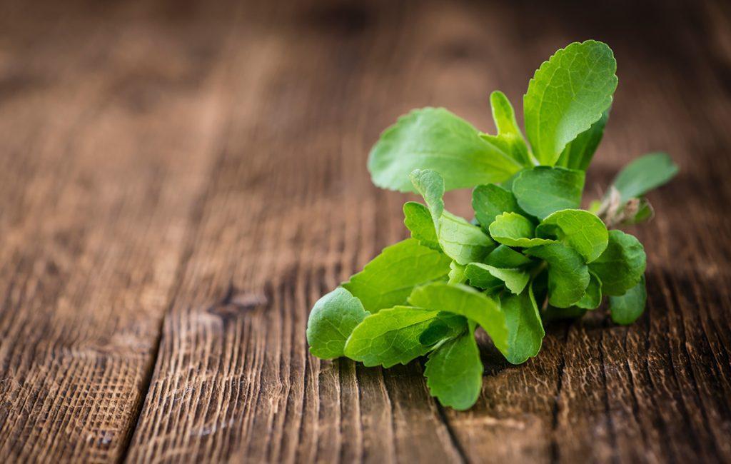 Image of Stevia Plant